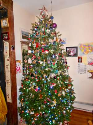 I Save the Best For Last, This is My Tree