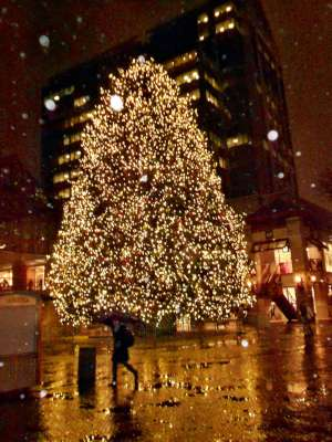 This is The Big Tree at Quincy Market