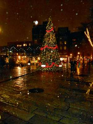 This is The Smaller Tree at Quincy Market