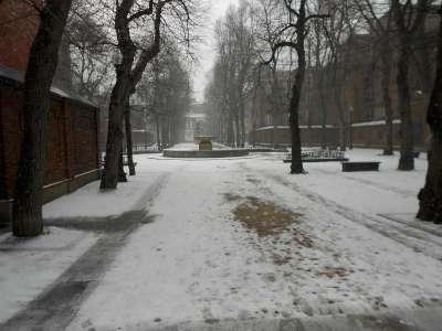 Snowy Prado